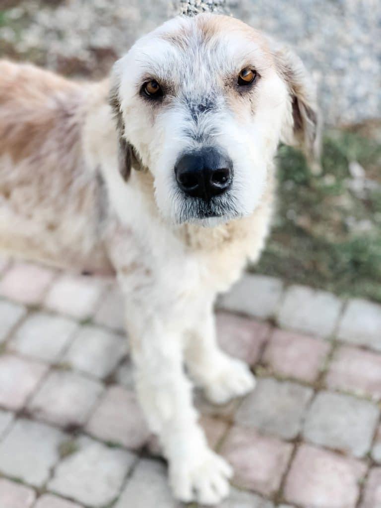 adopt a dog animal life